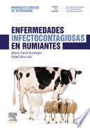 Enfermedades Infectocontagiosas En Rumiantes