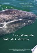 Las ballenas del Golfo de California