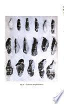 Publicaciones del Museo de etnología y antropología de Chile